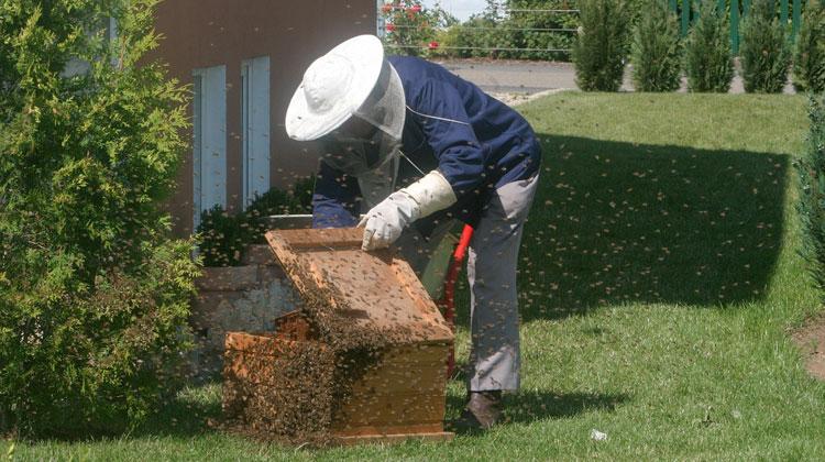 hire beekeeper