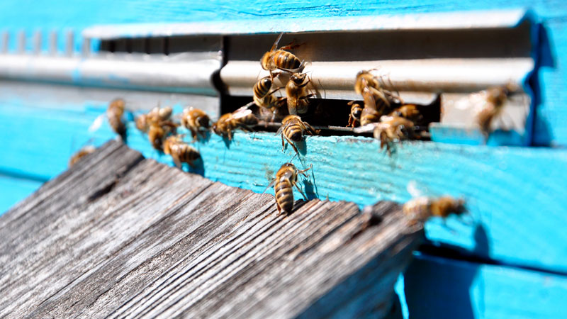 How to SAFELY Get Rid of Bees (and When You Shouldn't)