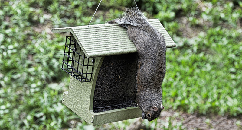 keep squirrel out of bird feeder