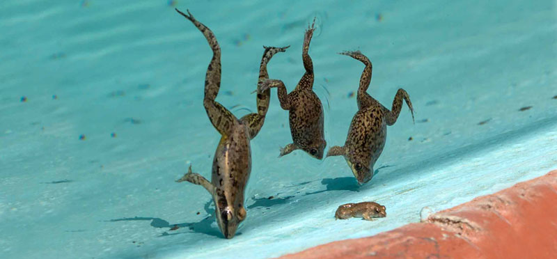 How to Get Rid of Frogs and Keep Them Away (Yard, Pool, or Pond)