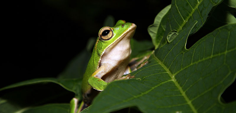 getting rid of tree frogs