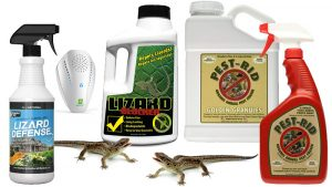 best lizard repellent