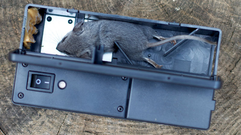 best rat trap