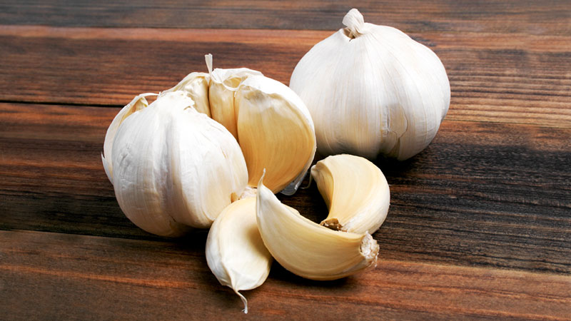 garlic repellent for pest control