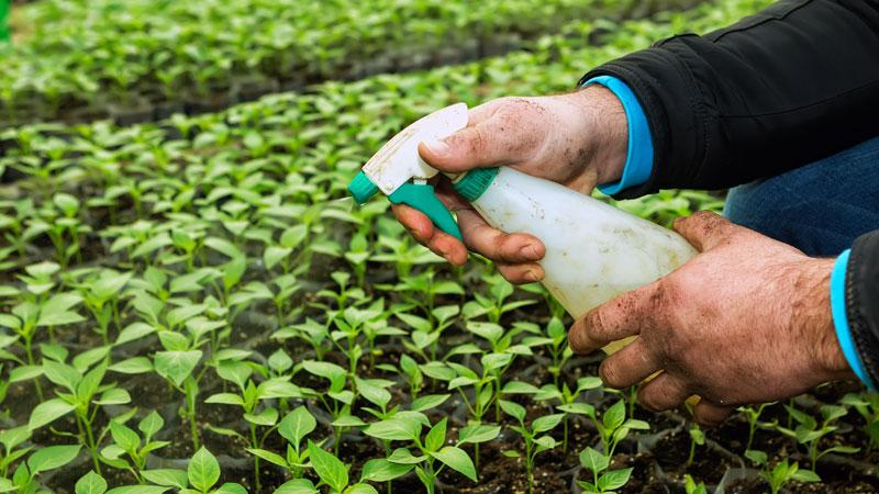 garlic spray for garden
