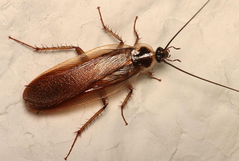 get rid of tree roach