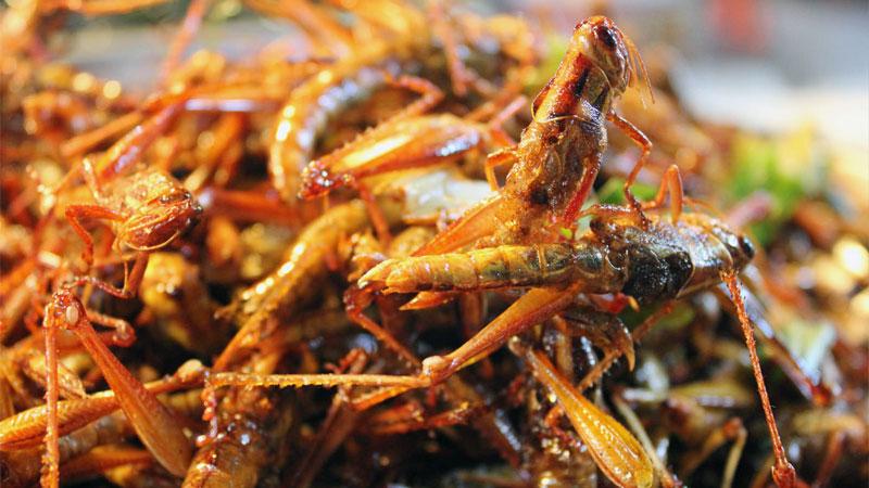 grasshopper food