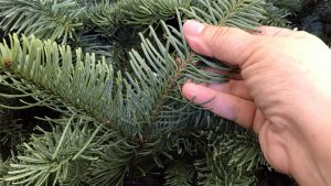 how to get rid of christmas tree bugs