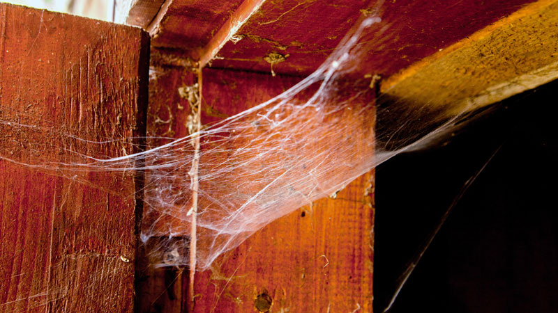 how to get rid of spider webs