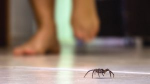 How to Get Rid of Spiders From Your Home