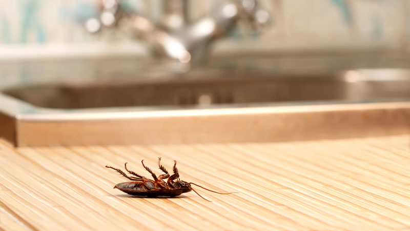 how to kill wood roaches