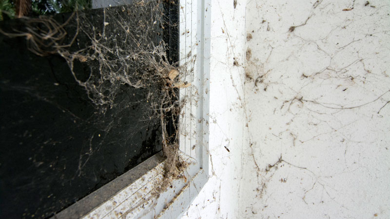 prevent spider webs outside of house