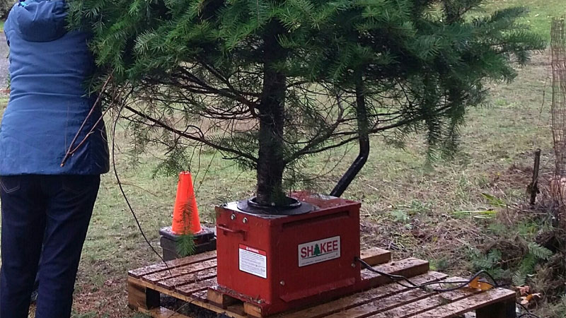shake Christmas tree